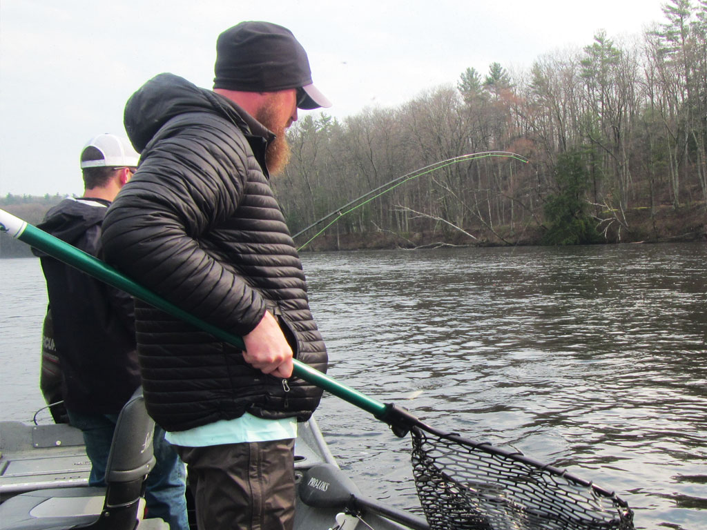 steelhead-net-fight-michigan